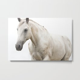 White Horse Photograph Metal Print