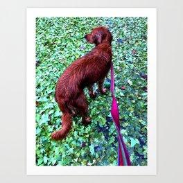 Red Setter Green Leaves Art Print