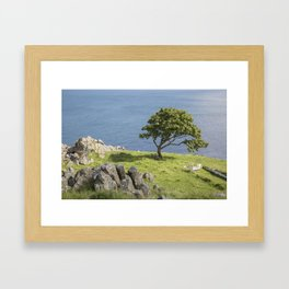 Rock and Tree, Murlough Beach; County Antrim; Northern Ireland Framed Art Print
