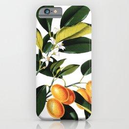 Kumquat - Citrus Japonica | Vintage botanical illustration iPhone Case