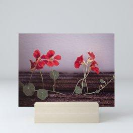Nasturtium Mini Art Print
