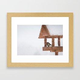 Parus Major bird Framed Art Print
