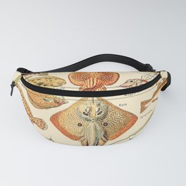 Vintage Fish Diagram // Poissons by Adolphe Millot 19th Century Science Textbook Artwork Fanny Pack