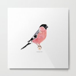 Siberian Bullfinch (white palette) Metal Print