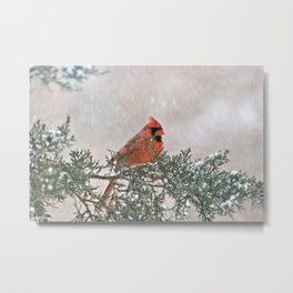 Snowfall Cardinal Metal Print