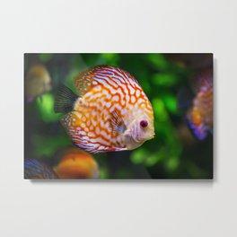 Discusfish Metal Print