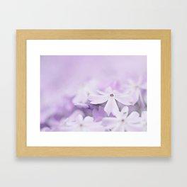 Purple Phlox Framed Art Print