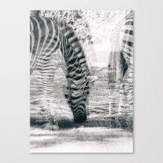 Zebre na trati. Canvas Print