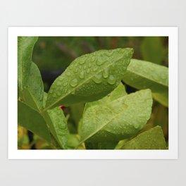 Dewdrop Leaves Art Print