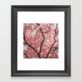 pink sunday Framed Art Print