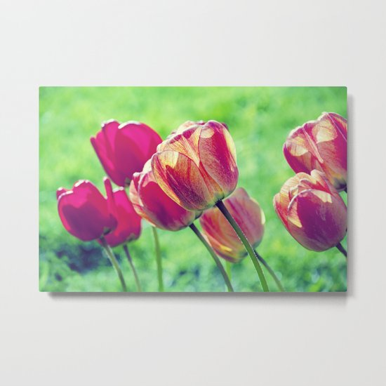 Lighted Tulips Metal Print