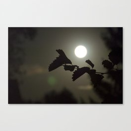 By the light of the full moon Canvas Print