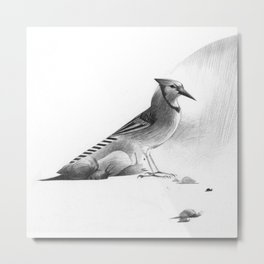 Blue Jay and Snails (title in description) Metal Print