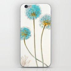 Vintage Aqua Beauties iPhone & iPod Skin