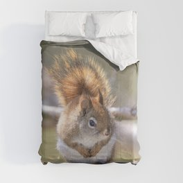American Red Squirrel Comforters