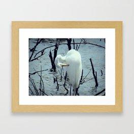 Great Egret in Water A108 Framed Art Print