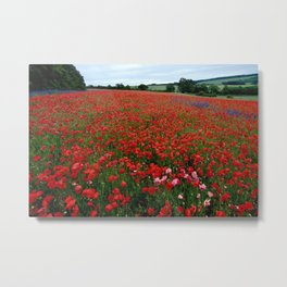 Pink Poppies in a field of Red Metal Print