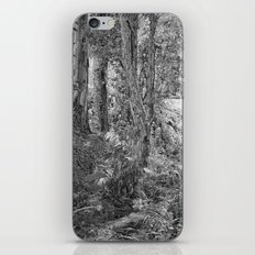 Rain forest view with creek iPhone & iPod Skin