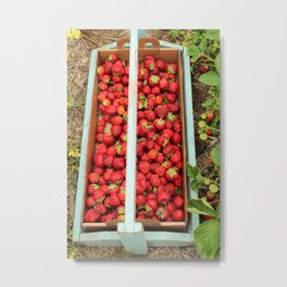 Strawberry Picking Metal Print