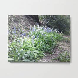 Bluebells Photo 610 Metal Print