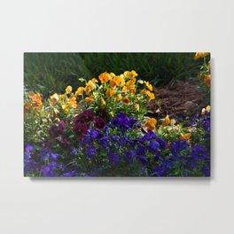 A bed of colorful pansies Metal Print
