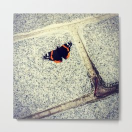 Butterfly on the road Metal Print