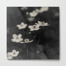 wood anenome in black and white Metal Print