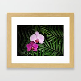 Orchids with palm leaves Framed Art Print