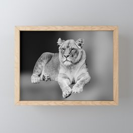 Female Lion  Framed Mini Art Print
