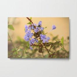 blue flowers !  Metal Print