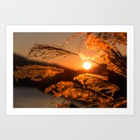 Feels Warm With The Sun Art Print