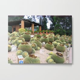 Round shaped cactus in summer Metal Print