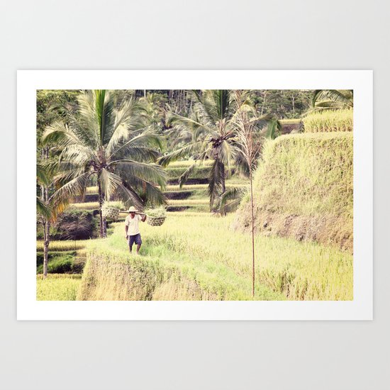 BALI SERIES - RICE FIELD Art Print
