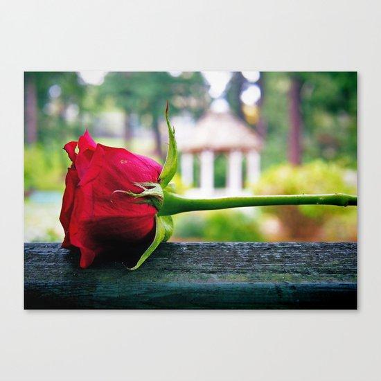 Last rose Canvas Print