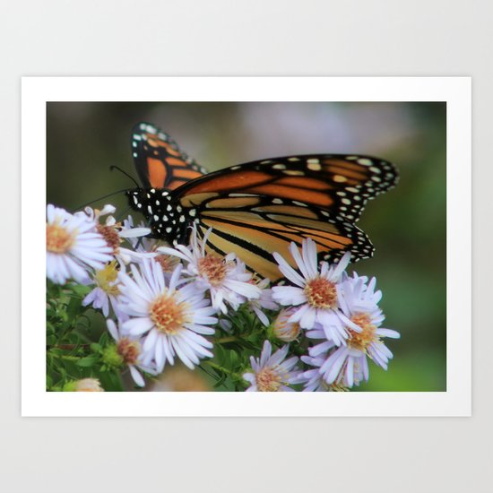 Butterfly/Flower Art Print