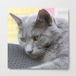 Gorgeous Grey Cat Photo Portrait Metal Print