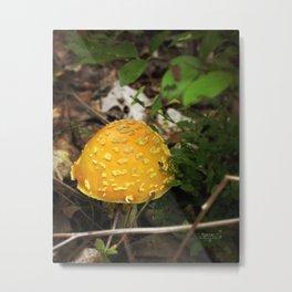 Mushroom Cap Metal Print