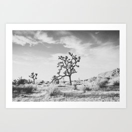 JOSHUA TREE XVI / California Art Print