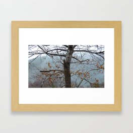 Tree trunk after a spring shower Framed Art Print