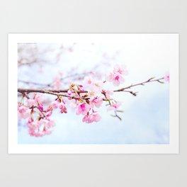 Japanese cherry-blossom tree, 'Oh-kanzakura' Art Print