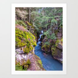 Trail of the Cedars Art Print