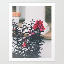 Sunset Magic Crape Myrtle Art Print
