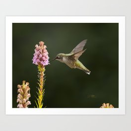 Hummingbird and flower II Art Print