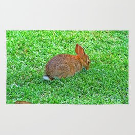 Shy Bunny Rug