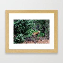 King of the Woods Framed Art Print