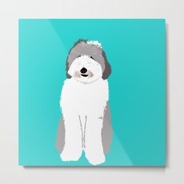 Lucy The Sheepadoodle Metal Print