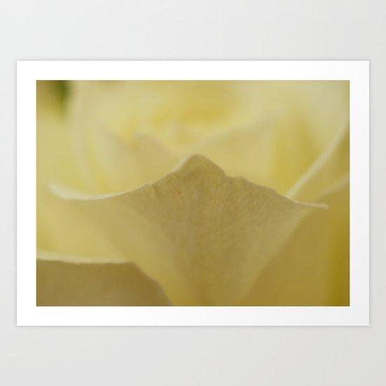 Yellow Roses (25) Art Print