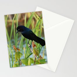 Grackle Hiding In Marsh Stationery Cards