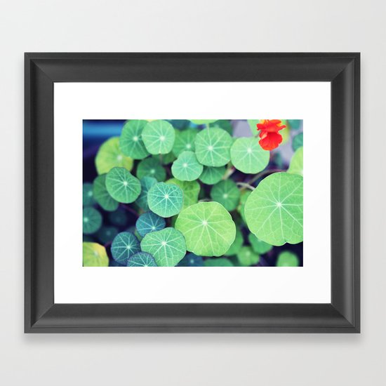 Aquatic Life Framed Art Print