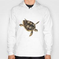 sea turtle Hoodies featuring Sea turtle by Anna Yudina